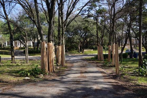 Protecting the Live Oaks.