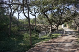 Fence around the oldest Live Oak